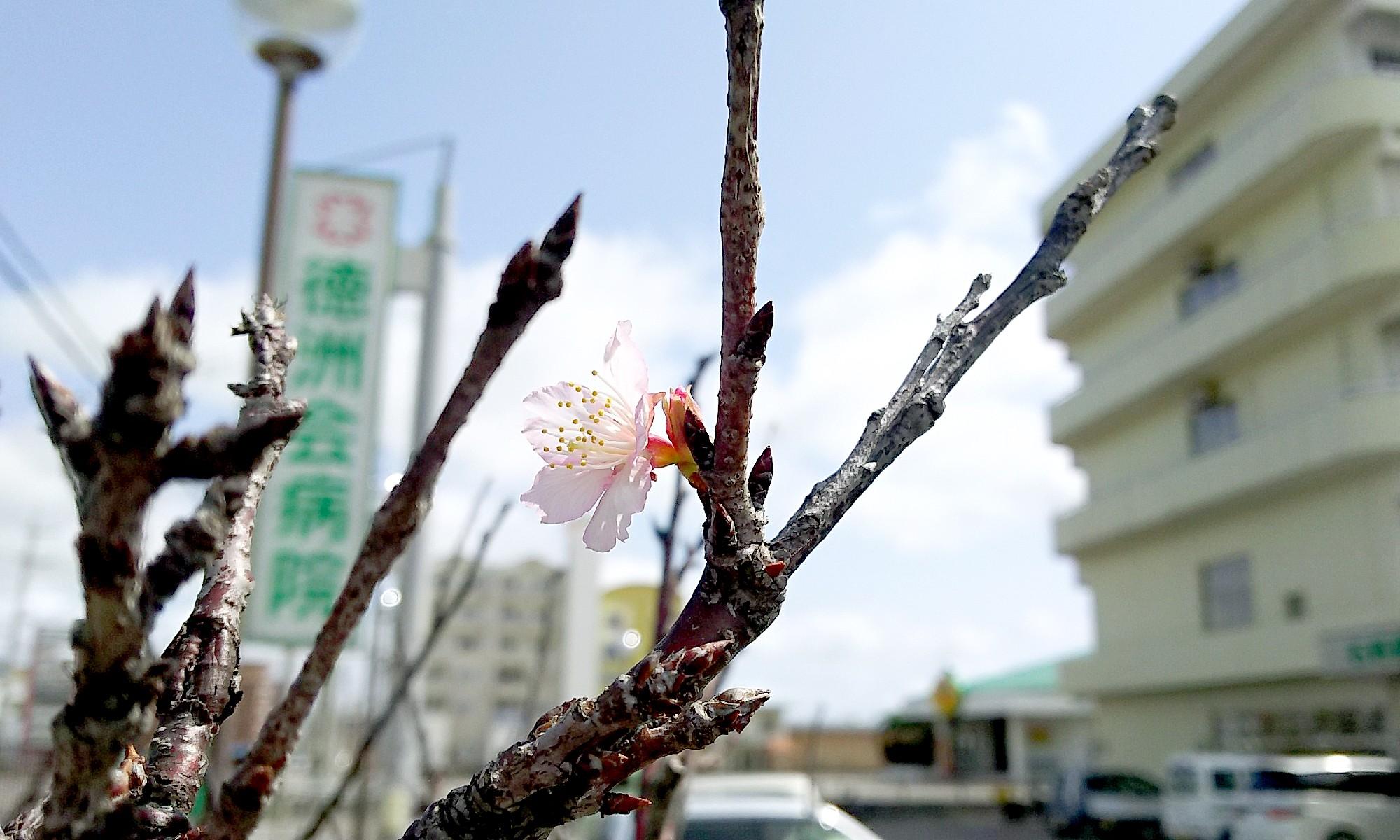石垣島徳洲会病院の風景